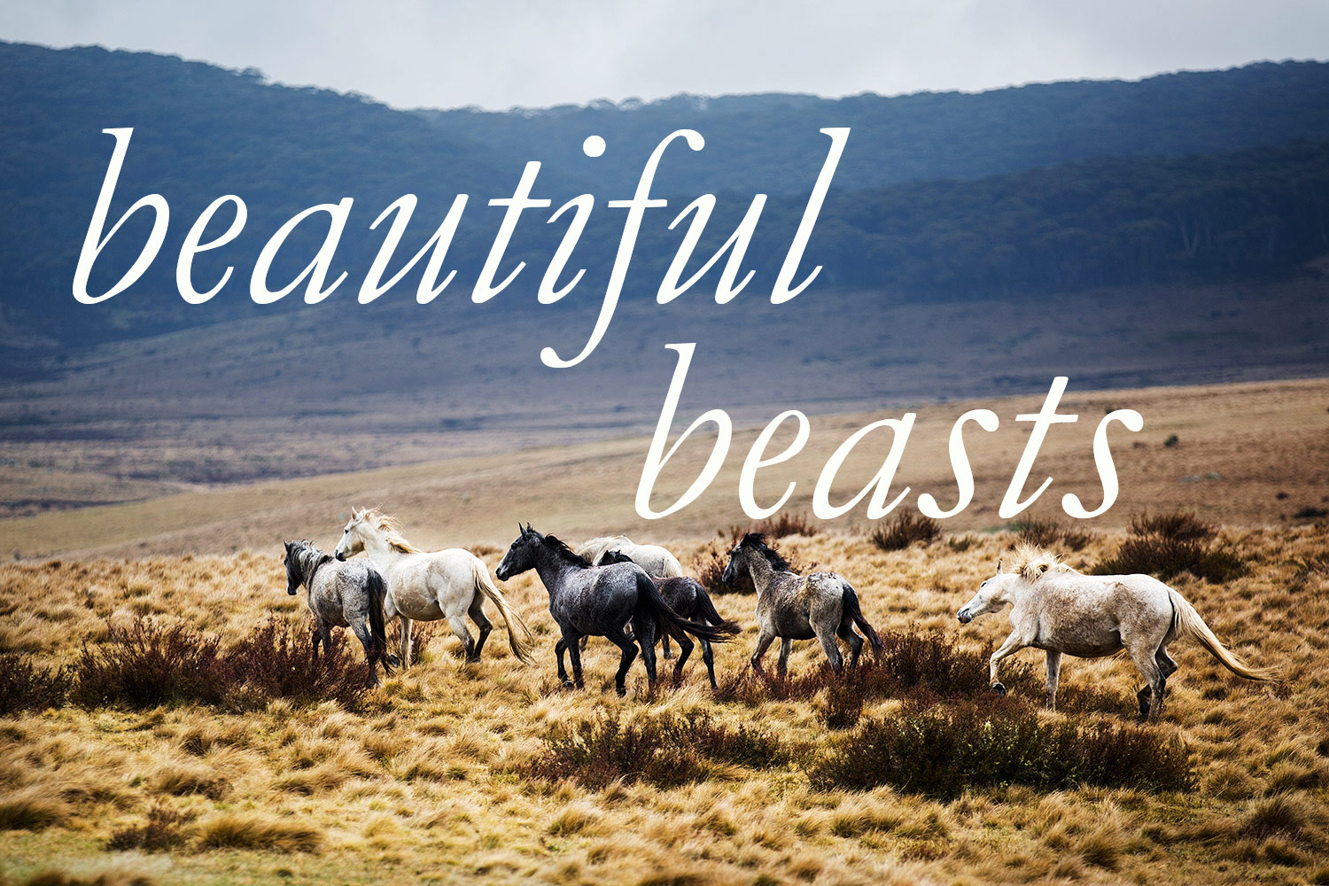 beautiful beasts, a new series of limited edition photographic prints